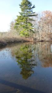 reflectedtree